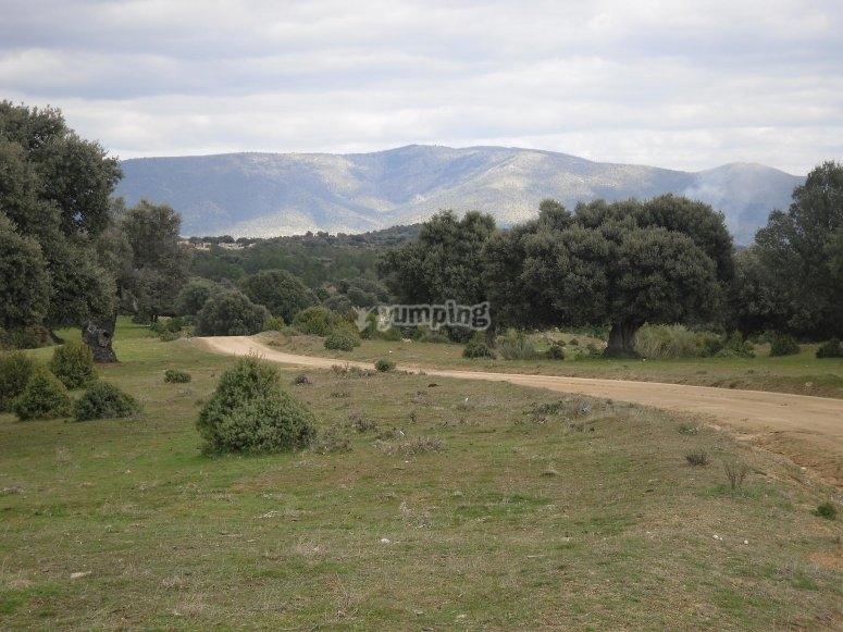 Oak tree area for activities