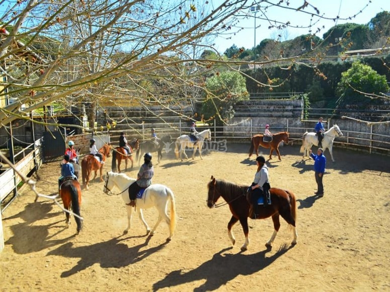 Clases de equitación para todos los niveles