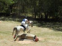 Entrenando al equino con obstáculos