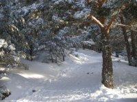 arboles llenos de nieve al igual que el suelo