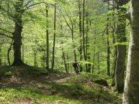 Por el bosque en bici