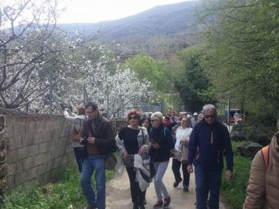 Cherry excursion around El Jerte for groups only