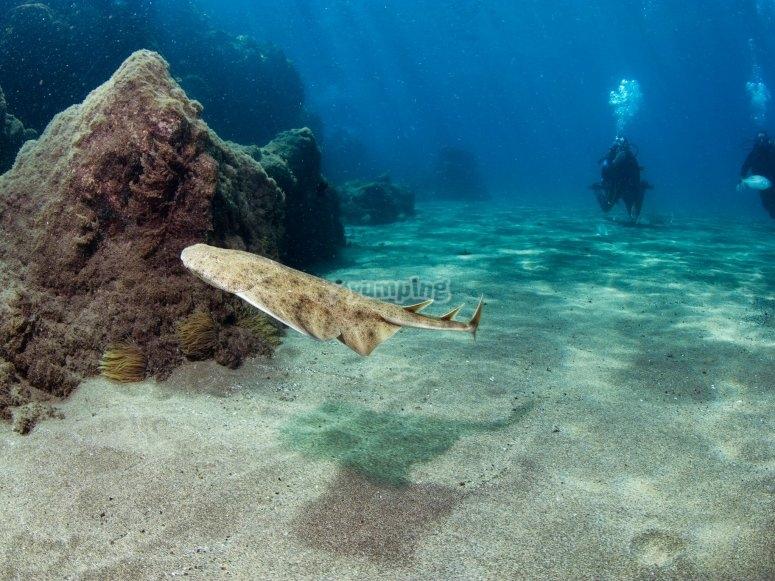 海底小鲨鱼