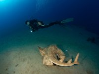 在兰萨罗特岛潜水住宿