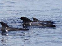 Cetaceos contemplados desde el barco