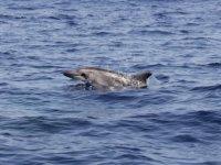 Delfin sacando el morro