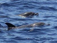 Pareja de delfines
