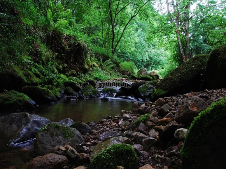 大自然中的溪流