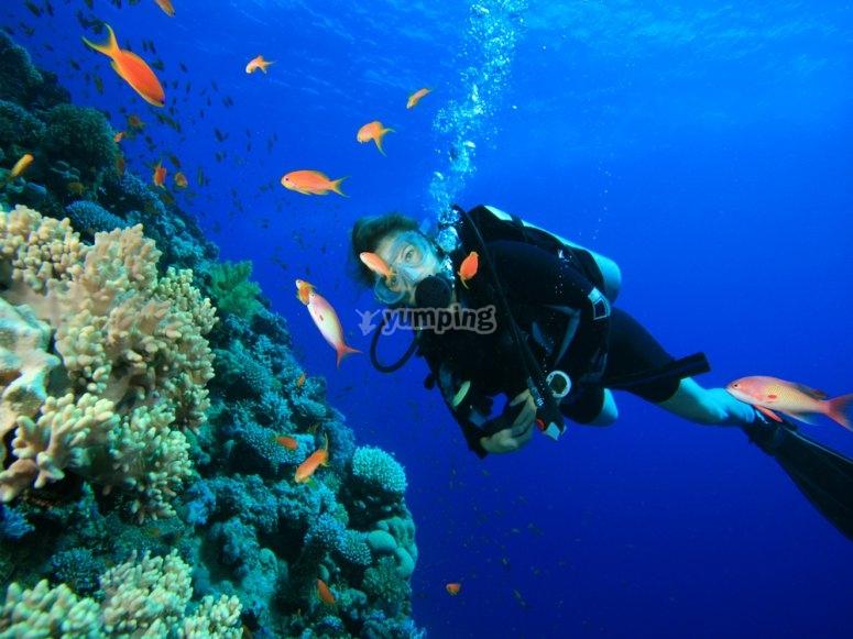 Con attrezzatura subacquea e monitor di qualità