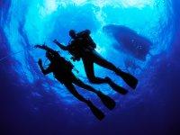 特内里费岛的开放水域潜水课程