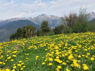 游览比利牛斯山脉的团体游览