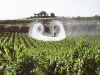 Irrigazione del vigneto