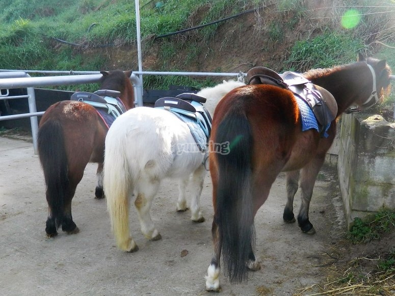 How to take care of the ponies