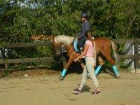 5 horse-riding classes pass