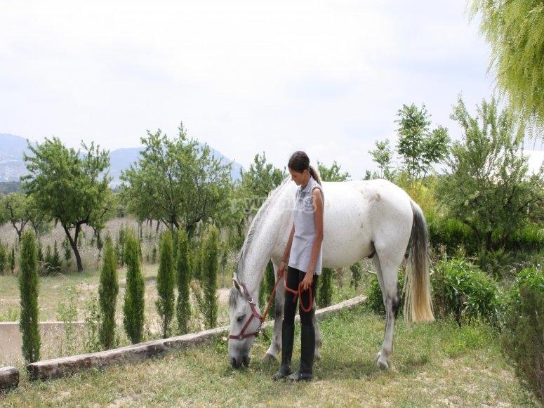Parada para que el caballo coma