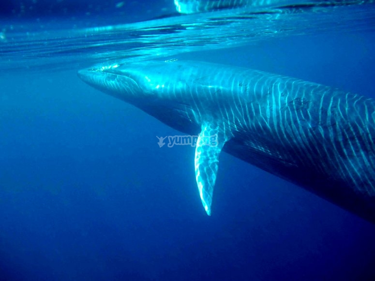 Other cetaceans such as whales