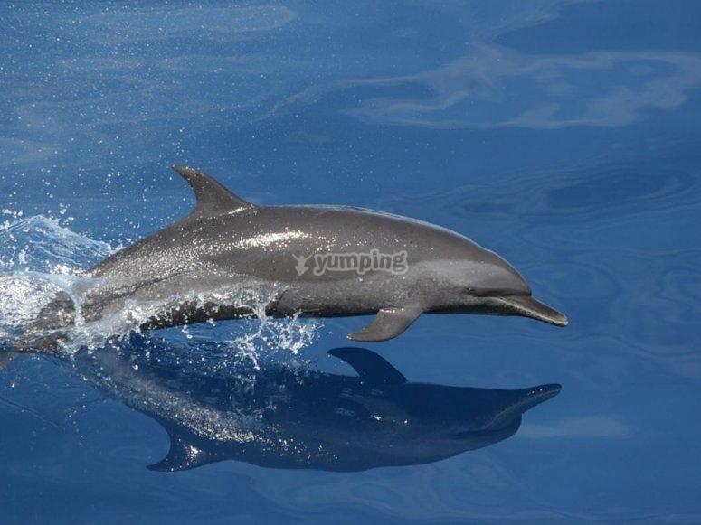 Delfin dando saltos en el agua