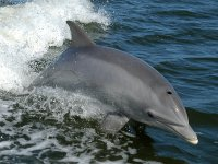 Dolphin sightings in Cantabria