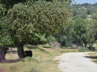 Touring the Extremaduran countryside