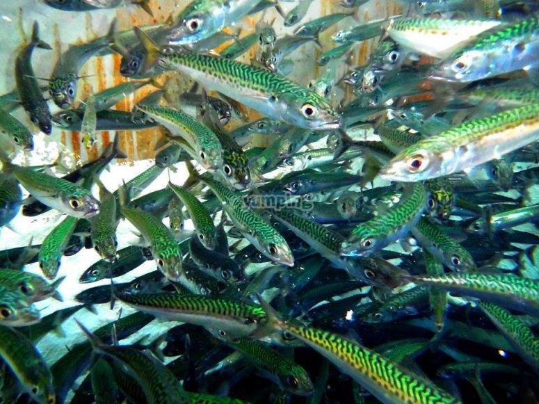 Muchos peces que pescar