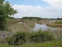 parque natural de donana