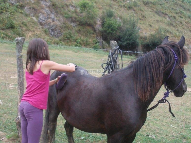 Aprendiendo a cuidar a su caballo