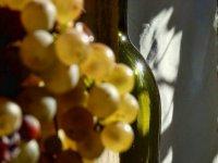 瓶葡萄园一串葡萄