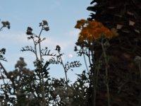 atardecer bajo la luna llena