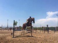 Saltando sobre el caballo los obstáculos