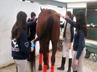 Cuidando al caballo antes de la clase