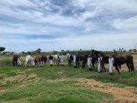 Alumnos de equitación junto a los caballos