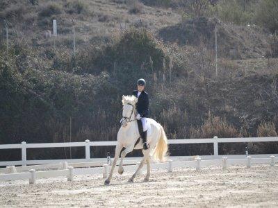 Hípica Pura Doma Clases de Equitación