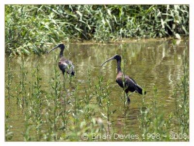 Doñana Bird Tours