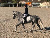 Clases de equitación en Madrid