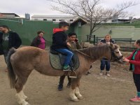 Primera toma de contacto sobre el pony