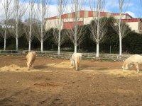 Caballos comiendo en el centro