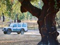 Todoterreno bajo los árboles de Monfragüe