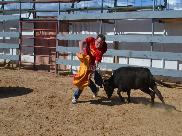 Toreando a la vaquilla