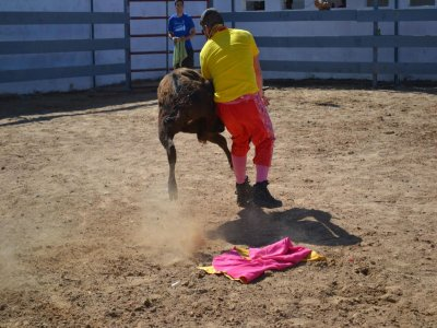 Heifer fighting in Sagunto + exhibition and disco.