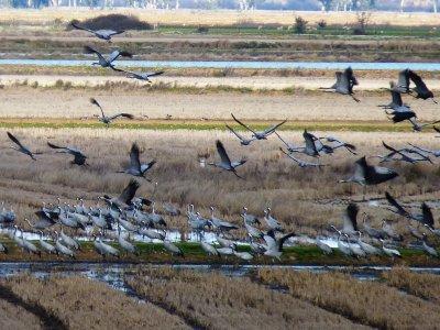 Birding Extremadura