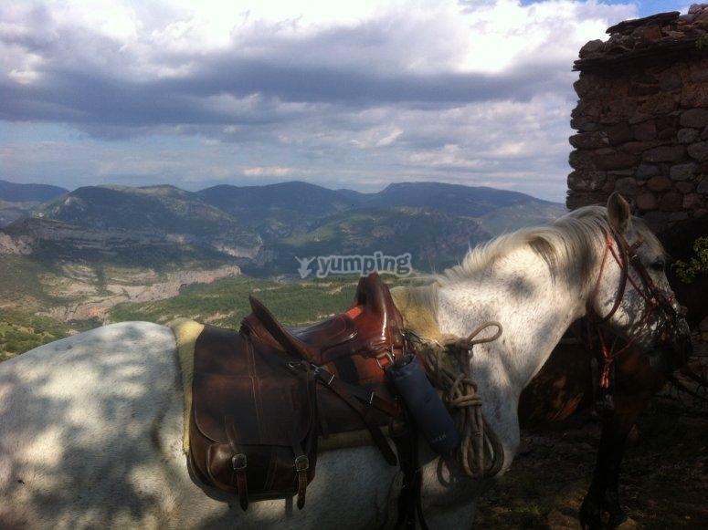 友好友善的马匹恭候您