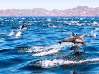 参观大加那利岛以南的海豚和鲸鱼