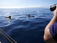 查看大加那利岛的海豚和越野车路线