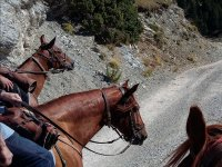 Siguiendo el camino con los caballos
