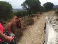 Siguiendo la ruta con los caballos