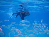 hombre buceando con un banco de peces a su alrededor