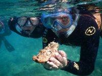 dos buceadores con una maravilla del mar en sus manos