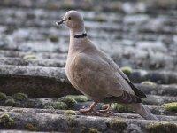 Ornitologia en Navarra