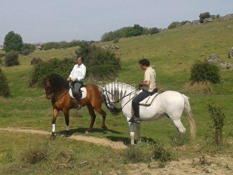 Horse back in the range
