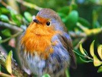 Ornitologia y observacion del medio